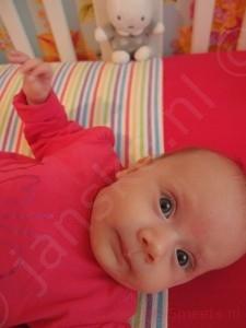 Lola 3 maanden - knap koppie