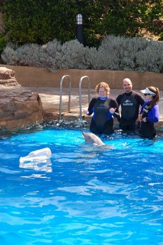 De dolfijn brengt de flessenpost