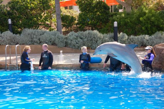 leuk hoor al die dolfijnen, maar wij hebben iets veel leukers te vieren