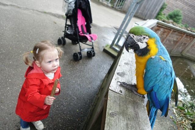 Hallo papagaaitje