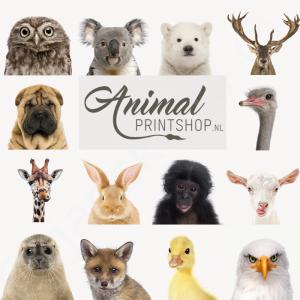 cadeaubon-animalprintshop-2017